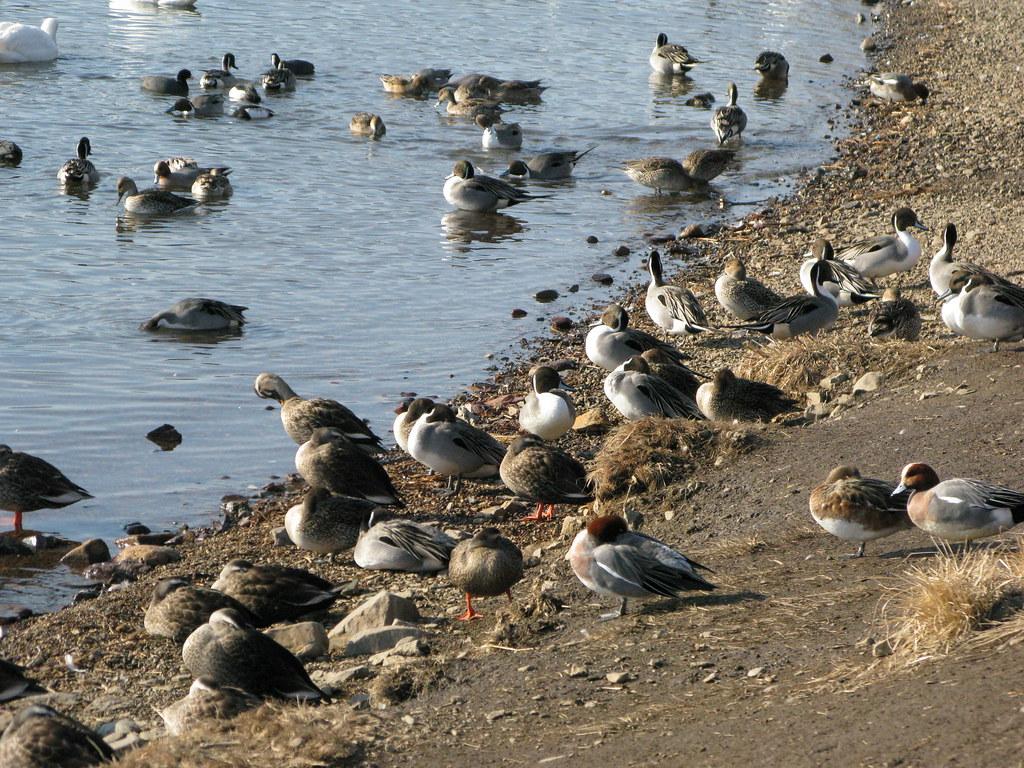 鳥の群れに少し近寄る