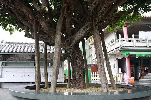 白河關仔嶺大仙寺43