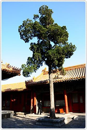 北京故宮 (35).JPG