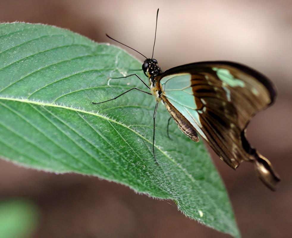 La serre aux papillons la queue en yvelines - Page 3 5795913549_b1fe858545_o