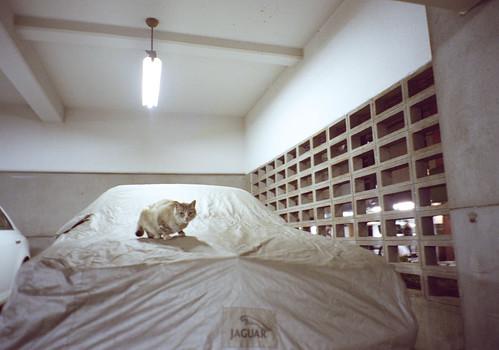 猫ジャガー
