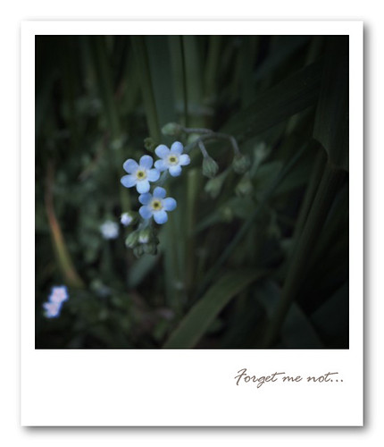 R0013738:Forget me not...