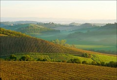Vineyards at dawn (Teobius) Tags: morning italy mist nature fog sunrise landscape dawn countryside early vineyard haze san gimignano country hill tuscany chianti siena rolling