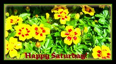 """""""Life is what we make it. Always has been, always will be."""" (KT of Lake Orion) Tags: flowers marigolds harvesttime happyweekend oaklandcounty farmmarket happyflowers oxfordmi"""