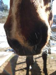 nose on legs (jusan) Tags: horse japan nose ibaraki kashima ibarakiken