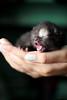 bundle of joy (-ViDa-) Tags: new baby cat kitten small tiny kittie babycat kittiecat bestofcats