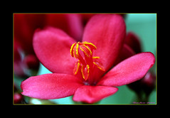"~~~""Heart~of~Gold""~~~ (~~~Gasssman~~~) Tags: searchthebest explore beautysecret macromania fineartphotos mywinners abigfave platinumphoto ysplix macromarvels flowersmacroworld multimegashot wonderfulworldofflowers awesomeblossoms 100commentgroup"