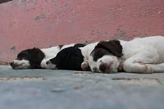 Cuccioli (Analucia  Bandoni) Tags: cane sony cuccioli alpha350