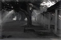 Oecussi town (Pante Macassar)