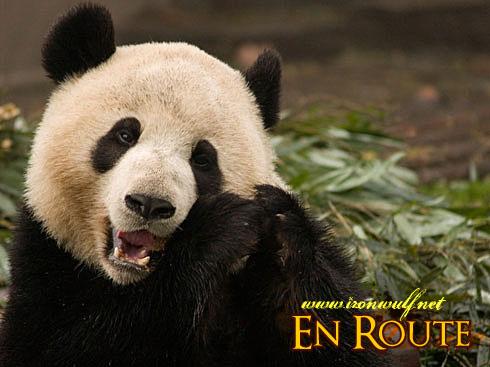 Panda Fun Snack
