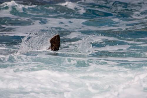 Seal (4)