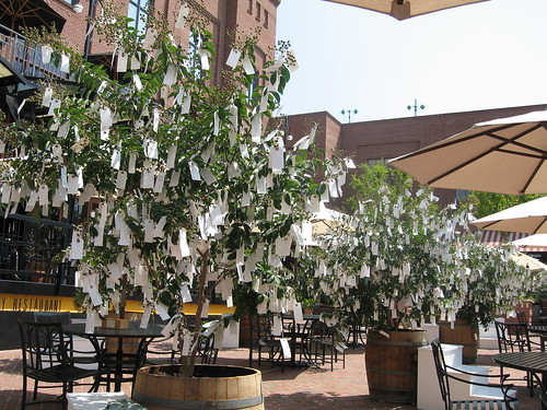 The Pasadena Wishing Tree