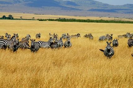 Мое второе пришествие в Кению, часть 7, авт DIK DIK