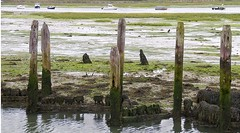 Old Jetty (jiminy8) Tags: seaweed boats sussex bosham oldjetty