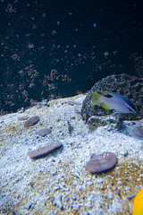 Seattle_3446 (absencesix) Tags: animals aquarium assortedevents captive coral events fish locale locations nature northamerica seattle seattleaquarium seattleaquariumtrip05022008 summer2008travel travel unitedstates washington camera:make=canon geocity geostate exif:model=canoneos30d exif:aperture=ƒ56 geocountrys exif:iso_speed=800 exif:lens=100200mm camera:model=canoneos30d exif:focal_length=20mm exif:make=canon 150secatf56 20mm 1020mm canoneos30d iso800 noflash apertureprioritymode 2008 may may22008 selfrating0stars subjectdistanceunknown