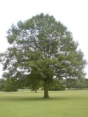 Tree (jamestrever) Tags: clumberpark k850i
