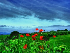 Not only poppies (esinuhe69) Tags: blue sky verde green nature blu country natura campagna cielo solo poppies only non umbria papaveri not abigfave damniwishidtakenthat esinuhe69 vignaie