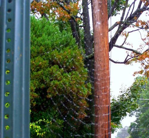 rainy_web