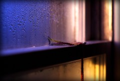 sill (chickentender (Eyewanders Foto)) Tags: morning light inspiration window beautiful droplets bedroom pin sill bokeh flag first kittens yarn photographs pane find recent yearn pentaxmsmc50mmf14 bedropped