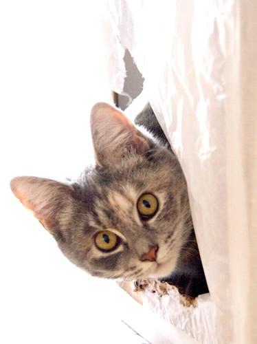 Schrodinger's Kitten