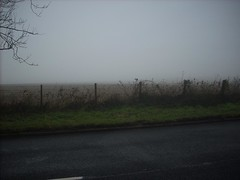 View throught the fog