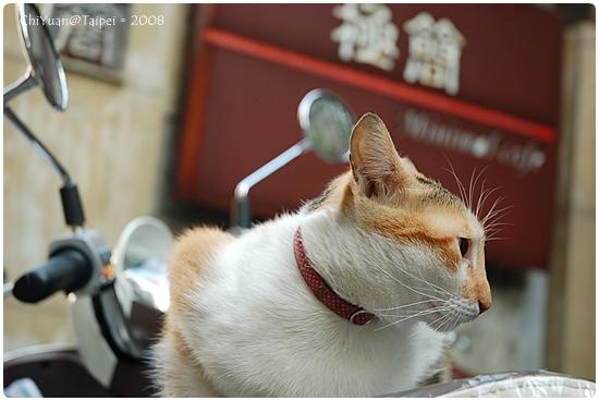 Cat。極簡咖啡(放風貓)01