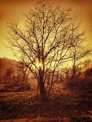 Jugando a ser dios...o demonio (davizalvarez) Tags: arbol atardecer rojo sony paisaje hdr ourense orense h7 arnoia dsch7 davizalvarez