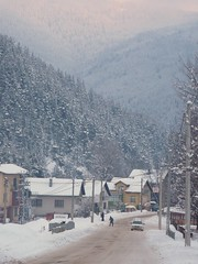 Govedartsi (John Spooner) Tags: xmas trees snow bulgaria rila creativecommons govedartsi rilamountains govedartzi govedarci   govedarzi