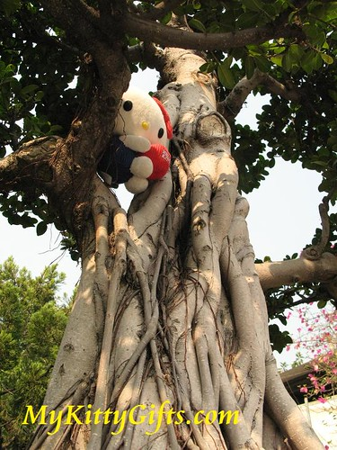 Hello Kitty Climbing Old Tree in Hong Kong Orchid Trip