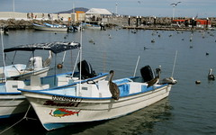 PC310088.JPG (Just a Pilgrim) Tags: cruise mexico loreto 0812
