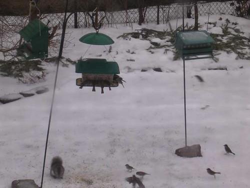 New feeder setup (as of January 7)
