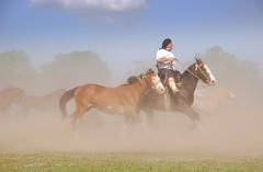 Domingo 'e polvo (Eduardo Amorim) Tags: horses horse southamerica argentina criollo caballo cheval caballos cavalos pferde herd cavalli cavallo cavalo gauchos pferd pampa hest hevonen chevaux gaucho  amricadosul hst gacho  campero amriquedusud provinciadebuenosaires  gachos  sudamrica sanantoniodeareco suramrica amricadelsur  areco sdamerika gregge crioulo troupeau caballoscriollos herde criollos  tropillas  pampaargentina camperos americadelsud tropilhas tropilla  crioulos cavalocrioulo americameridionale tropilha caballocriollo campeiros campeiro eduardoamorim cavaloscrioulos pampaargentino