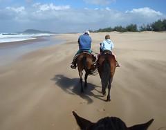 Windy horse ride on the beach (notFlunky) Tags: horse beach nature weather birds animal animals natal fauna southafrica flora wildlife windy clear stlucia picnik kwazulu