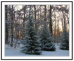 Dawn's Early Light (glenda.suebee) Tags: winter ohio snow sunrise oak woods jr spruce mlk glenda ohiofoothills