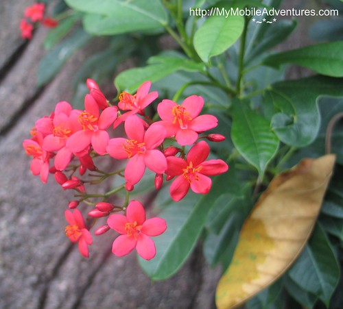IMG_7037-Macro-tiny-flowers-Disney-Animal-Kingdom