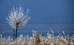 ice tree (Monika Ostermann) Tags: winter vacation sun lake tree ice fabulous monikaostermann