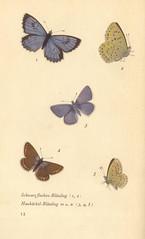 papillons d 8