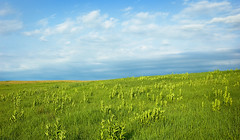 Late Spring prairie. (terranoesis) Tags: nature landscape spring nebraska natural native prairie tallgrass springcreekprairie