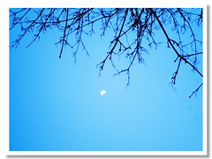my mom told me my first word is moon (Happy Imagoism Thursday) (SaDDuL) Tags: blue w