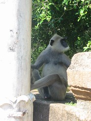 Sri Lanka, aap