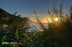 Coalcliff, NSW, HDR (green_pea) Tags: trees sun beach sunrise nikon 12mm nikkor clifton 1224mm f4 hdr photomatix d7000 mbd11