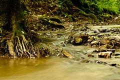 Wstenbach, in der Nhe von Kirchberg an der Murr (_Kolano_) Tags: wasser natur bach 24105mm wstenbach