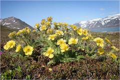 Цветистая Чукотка 4 (Магадан) Tags: anadyr chukotka анадырь чукотка чукчи луораветланы luoravetlan