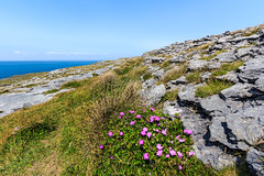 The karst landscape called the Burren, County Clare, Ireland (Maria_Globetrotter) Tags: ocean flowers blue ireland sea wild sky plant love tourism beautiful weather spectacular landscape photo bill amazing interesting day different pov awesome low perspective sunny pic visit irland atlantic special cranes clear kart blomma coastline burren bloody bild geranium blommor vackra irlanda irlande floers landskap sanguineum ire vackert img9147 blodnva mjuknva