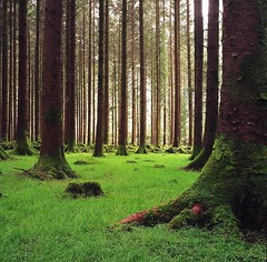 County Cork, Ireland (reddirt791/Bradley Cox) Tags: park trees ireland green forest cork 100v10f hasselblad barra c500 top20ireland challengeyouwinner anawesomeshot diamondclassphotographer theperfectphotographer gugan top20ireland20