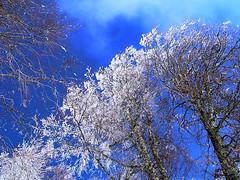 AO0702020 (gezilerden) Tags: snow kar kartepe altnolukyaylas