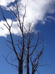 Trek - Bariloche - Frey - Jacob - arbre
