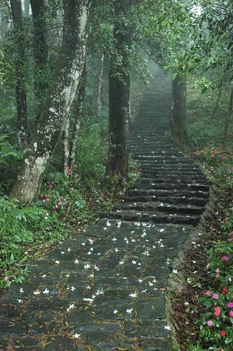 大崎棟步道全是階梯