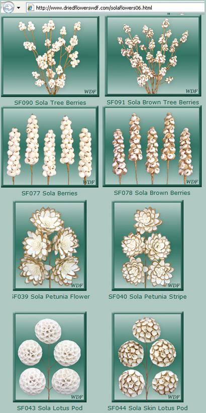 driedflowerswdf