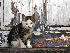 sad and cute little kitten (Tanjica Perovic Photography) Tags: door old texture look ca